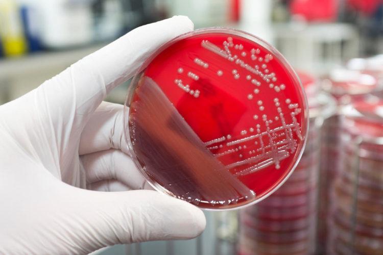 Badania mikrobiologiczne kosmetyków